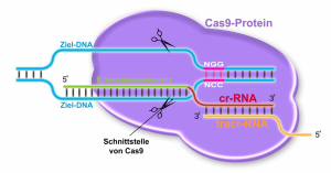 CRISPR_CAS-1024x536